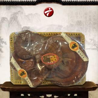 Nấm linh chi đỏ dạng khay 3-6 tai Hàn Quốc L003