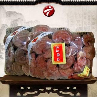 Nấm linh chi đá có chân (Khay 1kg) L017